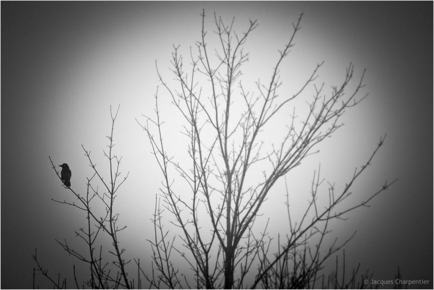 L'oiseau sur l'arbre, hiver 2015, © Jacques Charpentier