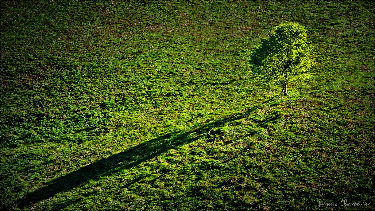 Arbre au crepuscule, couleur, Ax les Thermes, 2016 © Jacques Charpentier
